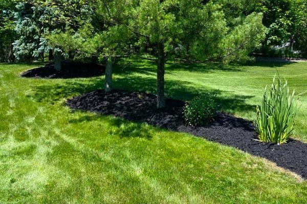 Landscaped mulch bed surrounded by grass with a tree in the center.