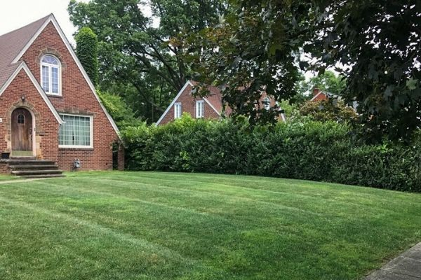 Recently Mowed Lawn in Independence.