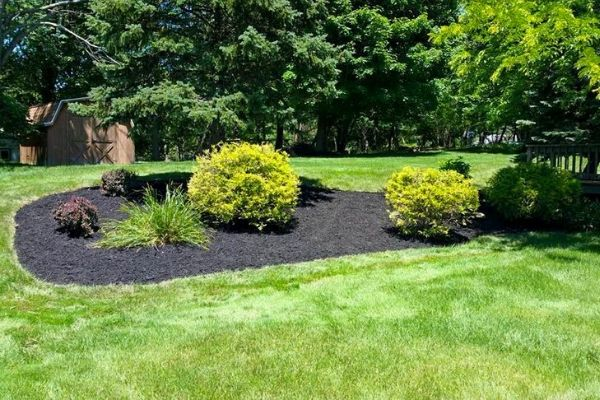 A mulched bed with pruned plants in the middle of a yard with a backround woodline.