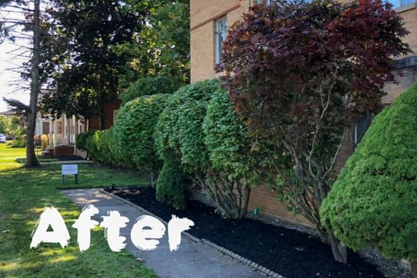 Fresh mulch and pruned shrubs along side of building.