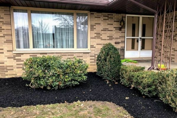 Pruned bushes in front of a local house.