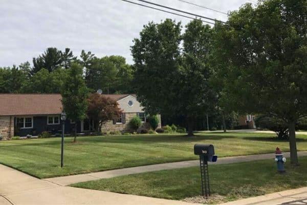 Clean green grass in a neighborhood.